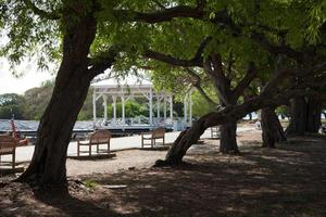 bänkar i parken foto