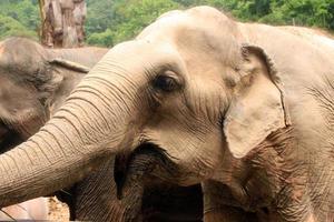 grupp elefanter foto
