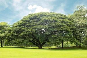 stort träd under dagen foto