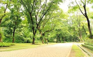 väg i park