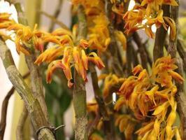 gula och orange blommor