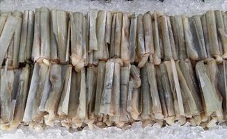 rakkniv mussla på färsk marknad