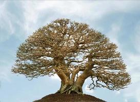 träd mot blå himmel foto