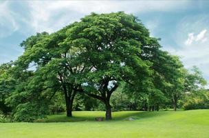 gröna träd och gräs foto