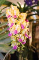 rosa och gula blommor