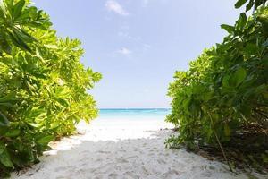 strand i Thailand foto