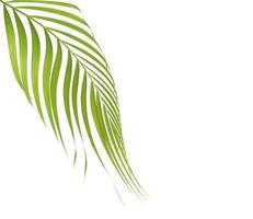 palmblad på vitt med kopieringsutrymme foto