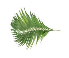 krökt grönt tropiskt blad på vitt foto