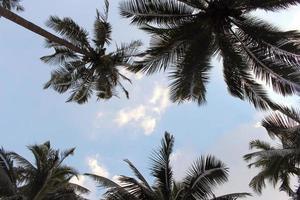tittar upp på palmer