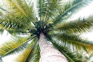 palmträd i starkt ljus