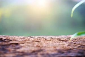 bark och plantera foto