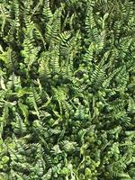 gröna fern blad