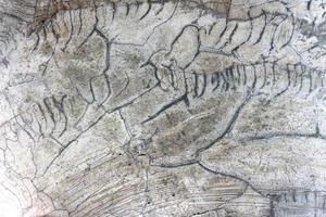 åldrad sprucken betong foto