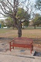 bänk under trädet