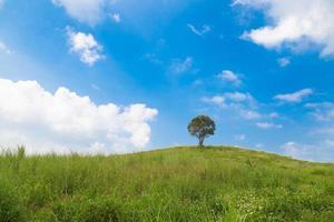 träd på kullen foto