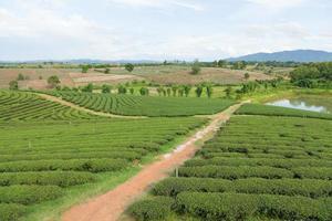te gård i Thailand foto