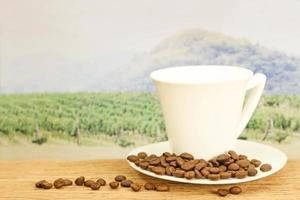 kaffebönor framför fältet foto