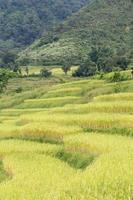 rislantgård på berget i Thailand