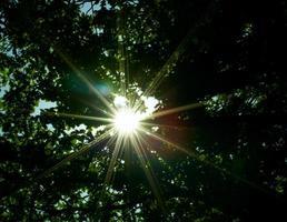 solen genom skogen foto