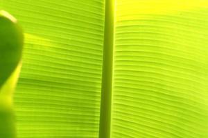 grönt tropiskt blad på nära håll foto