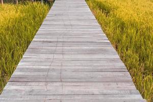 träbro över risfält foto