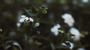 liten vit blomma med tropiska löv foto