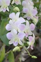 blommande orkidéblommor foto