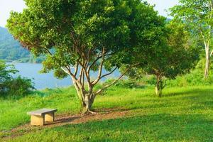 bänk under ett träd foto