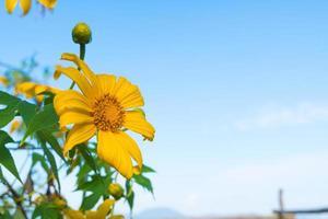 gul blomma i Thailand foto