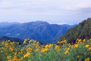 berg och gula blommor foto