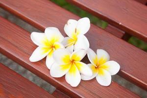 vita blommor på en stol