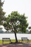 bänkar under trädet foto