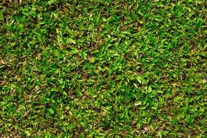 grönt gräs för konsistens eller bakgrund foto