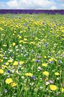 blomma blommar i fältet