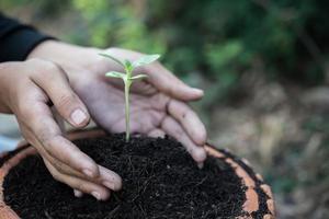 kvinnans händer som tar hand om en plantaplanta foto