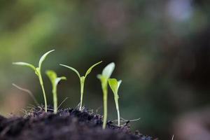 närbild av en ung gro som växer foto