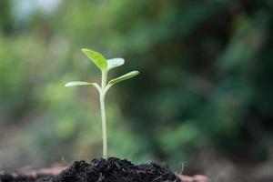närbild av unga groddar som växer
