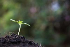 närbild av unga groddar som växer foto
