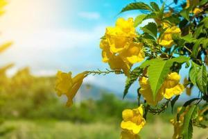 gula blommor i trädgården med blå himmel