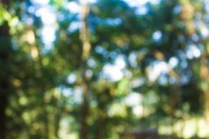 abstrakt bokeh oskärpa grönt träd i skog bakgrund. foto