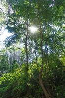 flod med solen som skiner genom skogen i Thailand