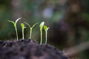 närbild av en ung gro som växer