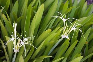 vita blommor i trädgården
