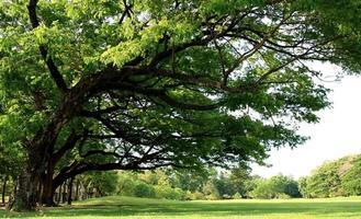 frodiga gröna träd foto