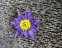 lotus på trä bakgrund foto