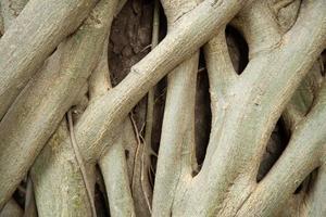 rötter av ett träd foto