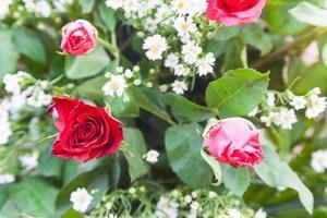 bukett med röda rosor foto