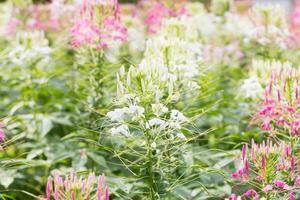 blommor i trädgården foto