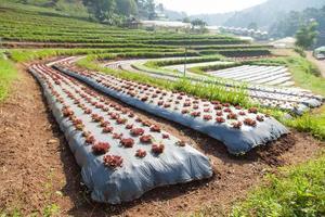 jordbrukslandskap i Thailand foto