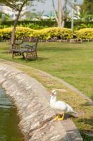 vita ankor i parken